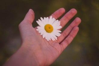 hand daisy